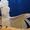 Какаду белохохлый или какаду Альба – ручные птенцы #99385