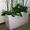 Комнатные растения и кашпо в Фитосервисе по доступным ценам #288802