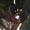 Алоказия Сuprea (медно-красная) #415976