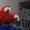Ара макао  (трехцветный ara Macao Macao) редкий вид – птенцы #448675