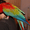 Ара сине-желтый (араруна) – ручные птенцы  #448679