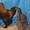 Куры и цыплята брама,  орпингтон, павловская #533017