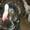 Продам куры породы Брама,  Кохинхин,  Орпингтон.Из уток - хохлатая,  украинская  #273269