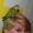 Зеленый и полностью ручной птенец выкормыш попугай Монах #1092382