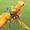 Гибриды попугаев ара   - птенцы выкормыши из питомников Европы #1126633