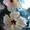 Гибискусы - комнатные растения #1281330