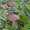 Продам земельный участок,  в живописном месте Рузского района,  М. О. #1379874