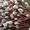 Продам вербу оптом сорт краснотал. #1533551