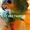 Венесуэльский амазон (Amazona amazonica) ручные птенцы из питомника #1696757