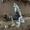 Столярные и плотницкие работы #1696503