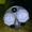 Героторные гидромоторы OML 32 151G2004 Зауэр Данфосс, Sauer-Danfoss НАЛИЧИЕ. При - Изображение #6, Объявление #1700033