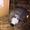 Мотор Шестеренны SNM2.L/ 6 . CO05 MEK6M Наличие! 121.20.502.00 SNM2NL/6, 0B6L5AD #1699947