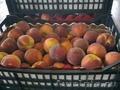 Прямые поставки, фрукты из Греции(Персик, Нектарин, Слива, Черешня)