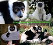 Приматы различные виды: игрунка,  лори,  капуцын,  макака,  зеленая мартышка ,  тамар