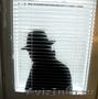 Предоставляю услуги частного детектива