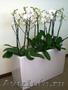 Комнатные растения и кашпо в Фитосервисе по доступным ценам