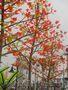 """Уличный светильник """"Дерево Клён"""", Объявление #370742"""