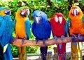 крупные попугаи