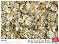 Плющилка для Зерна, Плющилки 300-500-1000 кг/ч - Изображение #2, Объявление #448733