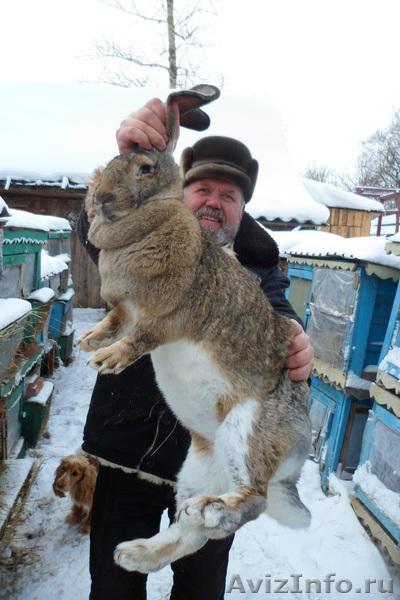 название: какая порода мясных кроликов самая лучшая отзывы Термобелье мужское Термобелье