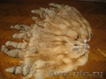 Шкуры Сибирской ярко-рыжей лисы.