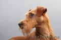 Стрижка собак,  кошек в Южном округе
