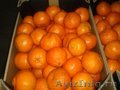 Фрукты и овощи из Европы  мандарин 35 руб