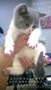 Мягкие коготки - антицарапки для кошек