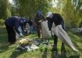 Расчистка участков,  вывоз мусора,  озеленение.