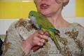 Зеленый и полностью ручной птенец выкормыш попугай Монах - Изображение #3, Объявление #1092382