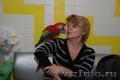Птенцы выкормыши трехцветного ара макао - 3 месяца - Изображение #2, Объявление #1092368