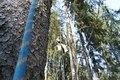 Oбработка деревьев от короеда. Удаление деревьев