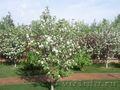 Обрезка фруктовых деревьев,  уход за садом