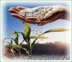 Карбамид, селитра (минудобрения), NPK по Украине и на экспорт., Объявление #1246213