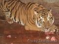тигрята питомник ручные, Объявление #1289947