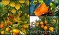 начался новый сезон фруктов