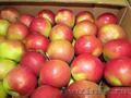 Яблоки Белорусские от производителя!, Объявление #1340858