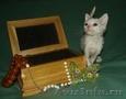котята уральский рекс