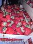 Черешня и клубника из Сербии оптом! - Изображение #8, Объявление #1098505
