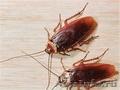 Клопы,  тараканы,  муравьи,  блохи. Быстро Надежно