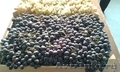 Виноград из Армении от производителя - Изображение #2, Объявление #1601524