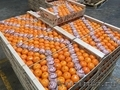 Свежие фрукты оптом, Объявление #1602199