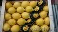 Свежие фрукты оптом - Изображение #3, Объявление #1602199
