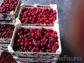 Свежие фрукты оптом - Изображение #6, Объявление #1602199