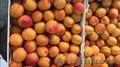 Свежие фрукты оптом - Изображение #7, Объявление #1602199