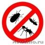 Профессиональное уничтожение клопов,  тараканов,  крыс и мышей