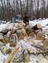 Удалением деревьев различной сложности в любом месте